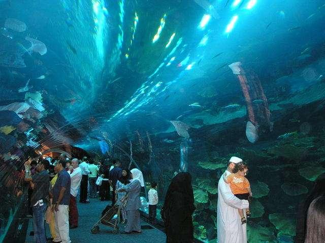fish aquarium qatar   fish aquarium centers in doha 2017